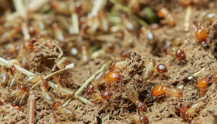 termites-3367347_1280